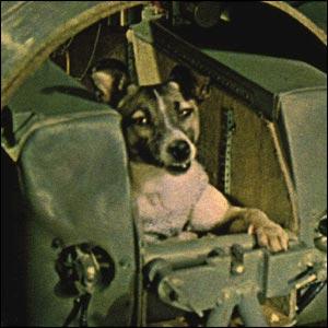 Фото №1 - Собаку Лайку увековечили в бронзе