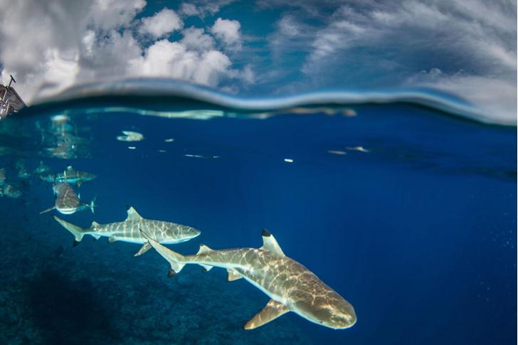 Фото №1 - Подводная фотоохота