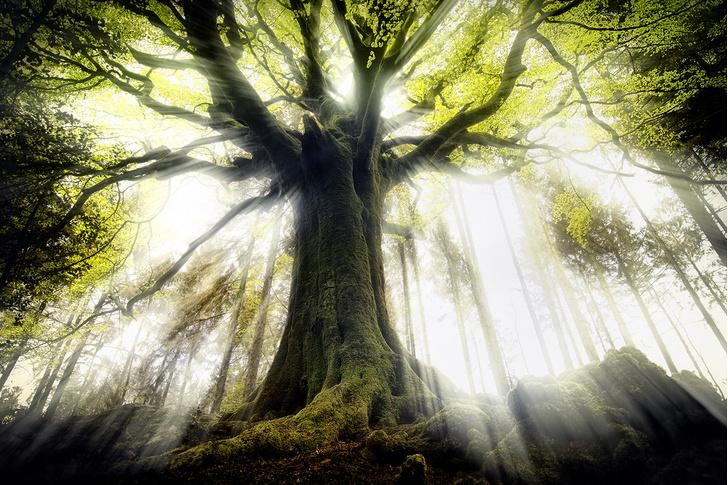Фото №1 - Мировая карта высоты деревьев