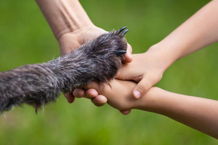 Собаки помогли мальчику выздороветь после тяжелых операций