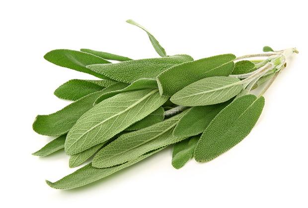 Фото №6 - Самые полезные лекарственные травы