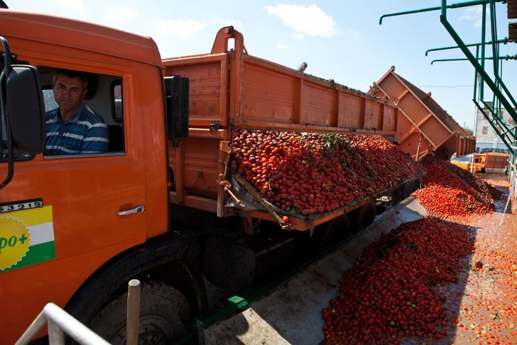 Фото №2 - Необычная экскурсия: как помидор становится томатной пастой ТМ «Помидорка»