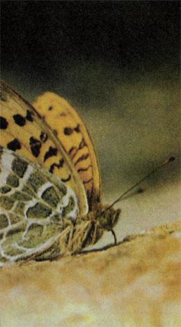 Фото №2 - В поисках Пенелопы