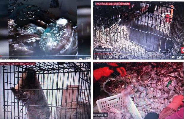 Фото №1 - В Сети появились фото и видео с того самого рынка в Ухане, откуда, возможно, начался коронавирус