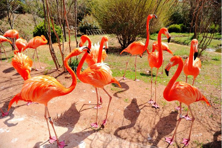 Фото №1 - Фламинго оказались верными друзьями