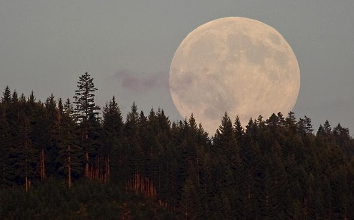 Фото №1 - Что, если бы... Земля осталась без Луны?