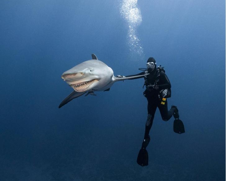 Фото №1 - Подводный друг