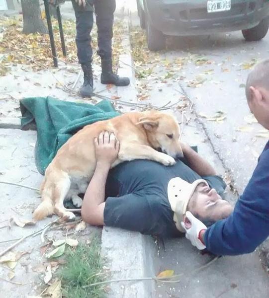 Фото №2 - До слез: преданность этих собак растопит любое сердце
