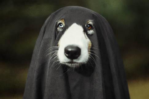 Фото №2 - Фотоподборка недели: собаки, которые уже готовы к Хэллоуину