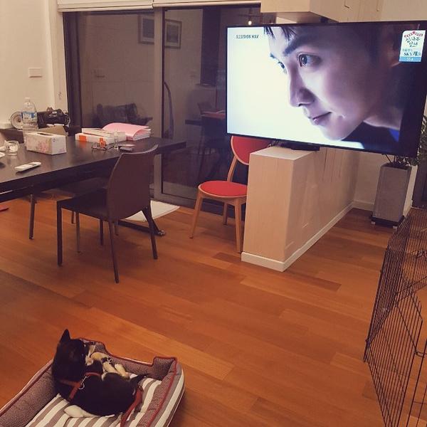 Фото №21 - Милота и позитив: домашние питомцы корейских актеров