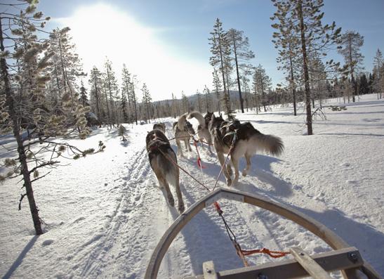 Фото №1 - Финляндия: жизнь собачья