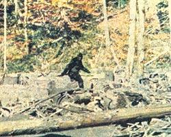 Фото №1 - В поисках хозяина леса