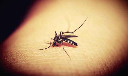 Фото №1 - С начала года от лихорадки денге в Бразилии погибли 300 человек. Туристам советуют быть осторожными