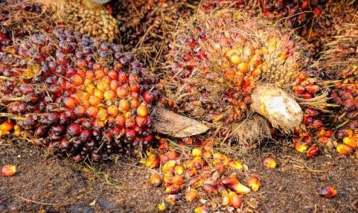 Фото №1 - Чем на самом деле пальмовое масло вредит здоровью: мнения экспертов