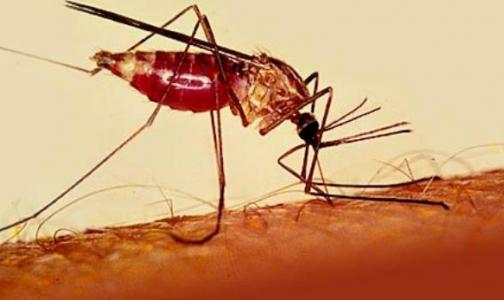 Фото №1 - Туристы не знают об опасных инфекциях в Африке и везут их в Петербург