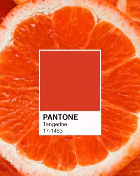 Фото №3 - Как менялся цвет года Pantone последние 10 лет