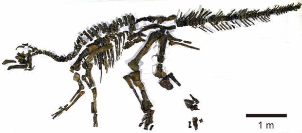 Фото №1 - В Японии обнаружен новый вид динозавров