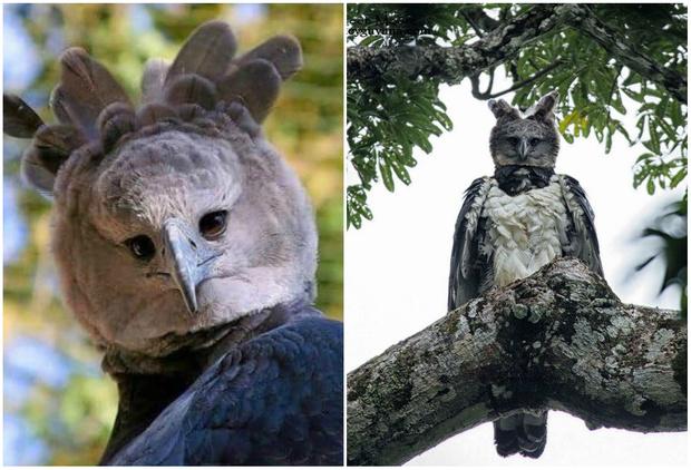 Фото №1 - В Интернете обсуждают огромного орла, который выглядит как человек в костюме