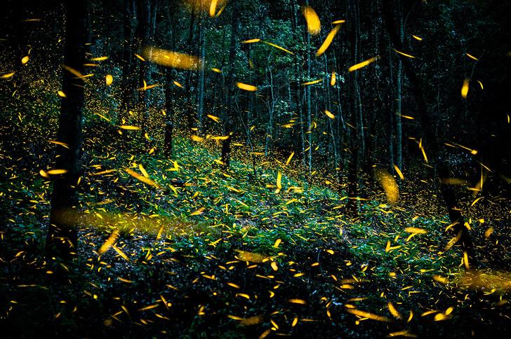 Фото №1 - Волшебный лес