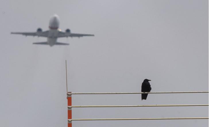 Фото №1 - Найден способ оградить самолеты от птиц