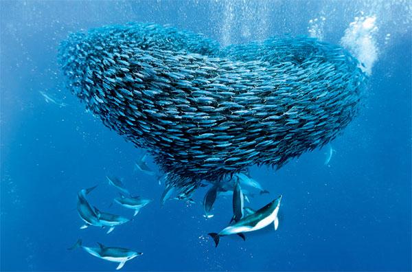Фото №6 - Люди океана