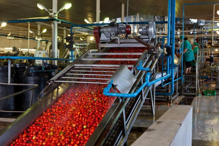 Фото №4 - Необычная экскурсия: как помидор становится томатной пастой ТМ «Помидорка»
