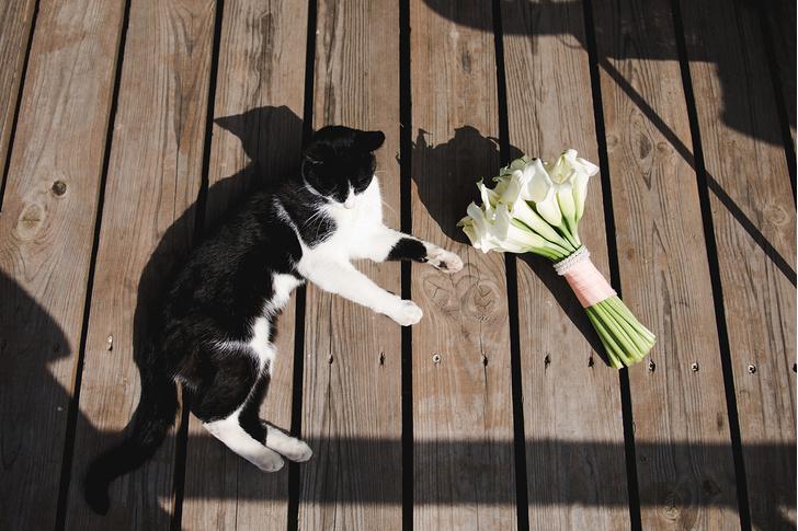 Фото №4 - 9 популярных цветов, которые смертельно опасны для котов