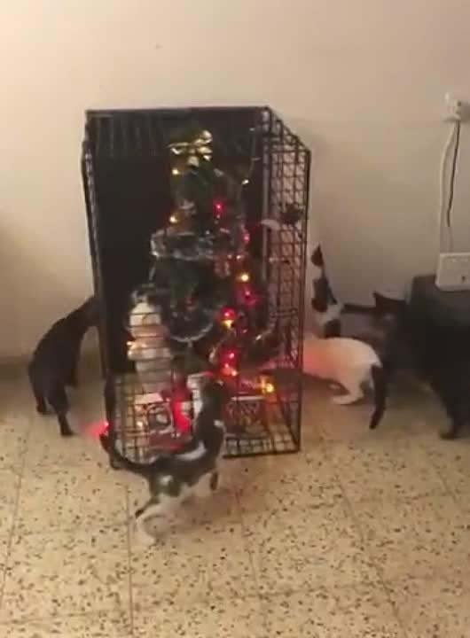 Фото №13 - Как защитить новогоднюю елку от кота: 7 самых хитрых способов с фотоинструкцией