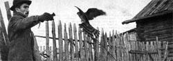 Фото №2 - Красная птичья потеха