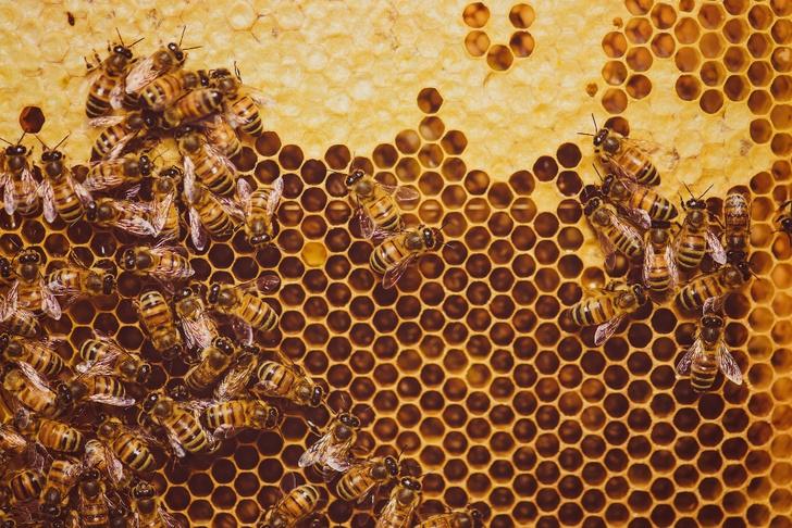 Фото №6 - Жизненно важное ж-ж-ж: интересные факты о пользе и важности пчел