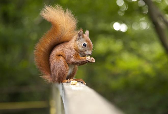 Фото №7 - 28 фактов о животных, которые поднимут настроение