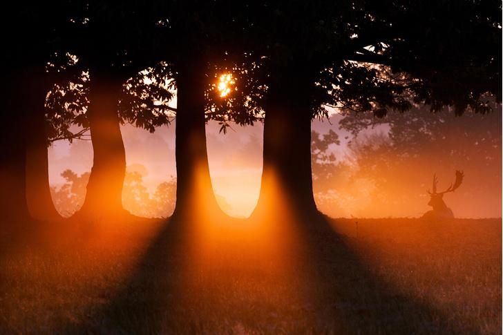 Фото №1 - Король леса