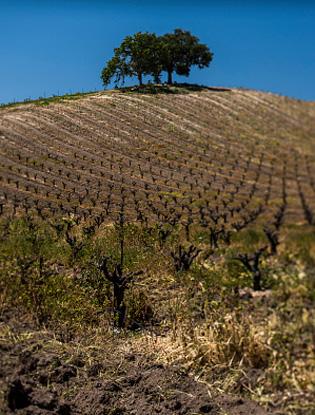 Фото №2 - Джаз, вино и праздник огня: 7 идей для фантастического осеннего путешествия