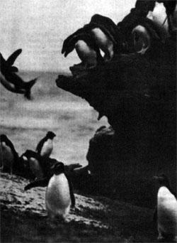 Фото №4 - Архипелаг черных фраков