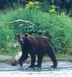 Фото №4 - Медвежья зона