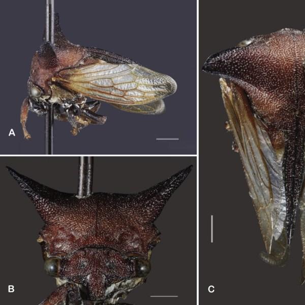 Фото №1 - В честь Леди Гаги назвали новый вид жуков