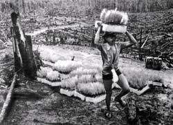 Фото №5 - Пепел амазонского леса