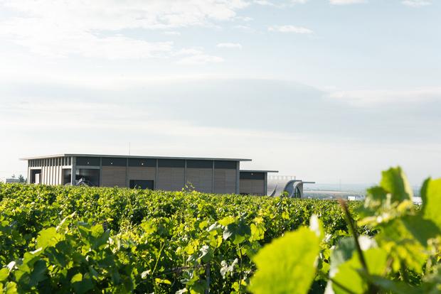 Фото №13 - Винодельня со смотровой площадкой на крыше в Чехии
