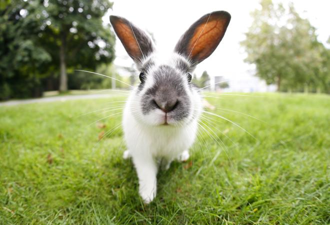 Фото №11 - 28 фактов о животных, которые поднимут настроение