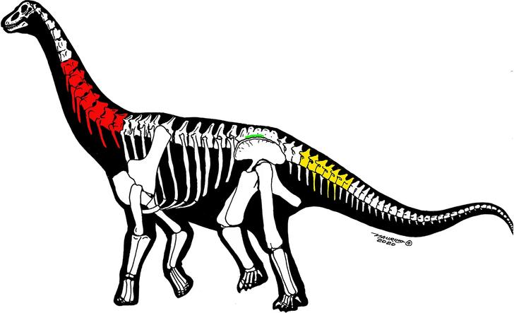 Фото №1 - В Китае обнаружили два новых вида динозавров