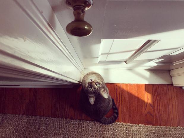 Фото №1 - Почему твой кот ненавидит закрытые двери?