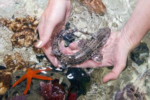Фото №26 - Путешествие на Лазурный берег: как сказку сделать былью