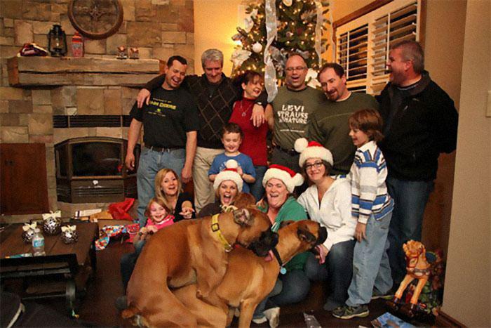 Фото №1 - 20 семейных новогодних фотографий, которые испортили собаки (галерея)