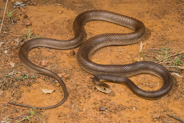 Фото №3 - Не только змеи: 10 самых опасных обитателей планеты