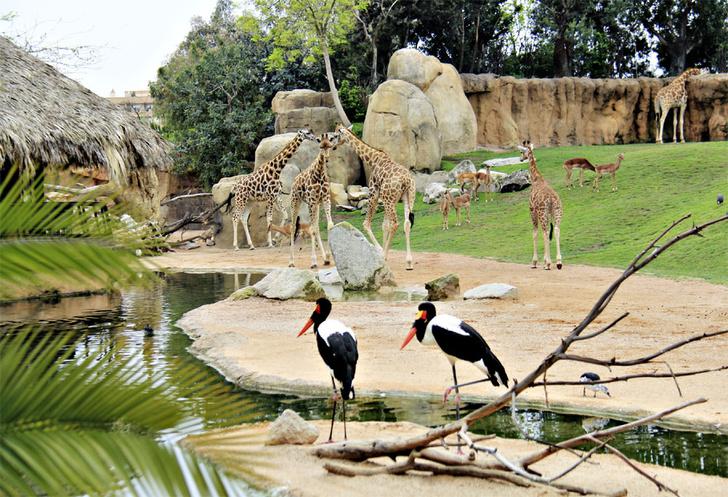 Фото №7 - Детки вне клетки: 12 лучших зоопарков мира