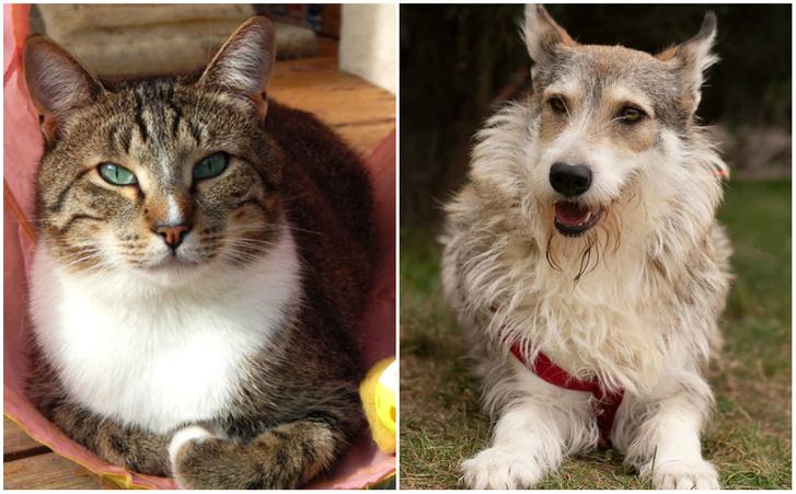 Фото №1 - Котопёс недели: кот Вигго и собака Мия