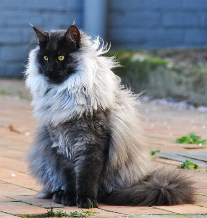 Фото №14 - 20 мемных котов, похожих на известных режиссеров