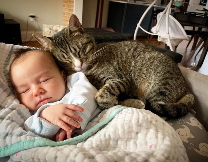 Фото №1 - Котик полюбил малыша еще до рождения: 5 видео милейшей дружбы