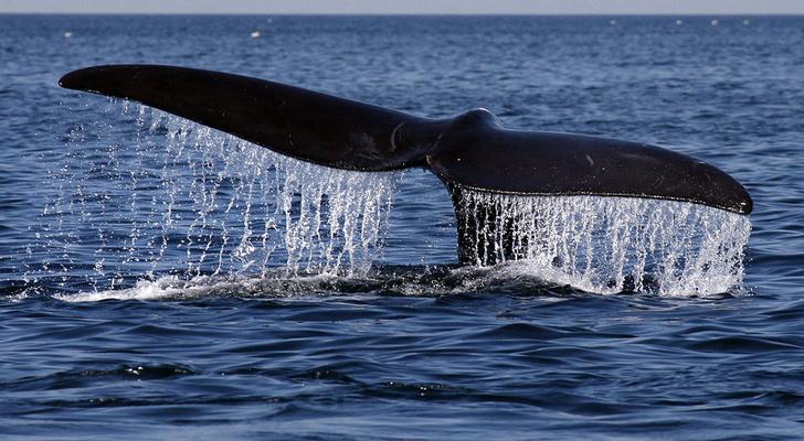 Фото №1 - В Северной Атлантике массово гибнут киты