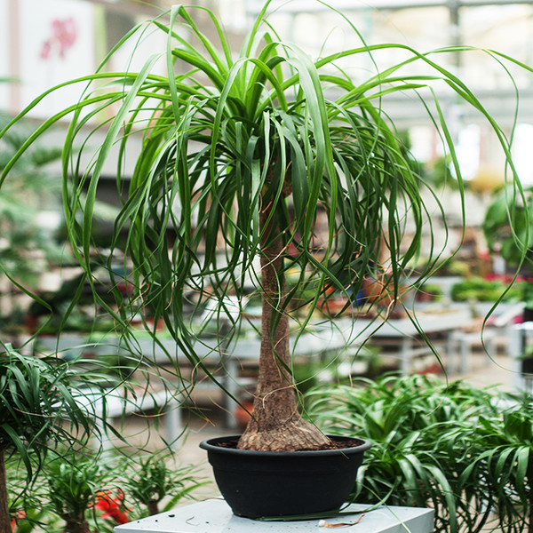Фото №7 - 6 самых неприхотливых комнатных растений